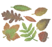 Fall Leaves 8 Piece Die Set