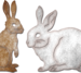 Bunnies (set of 2)