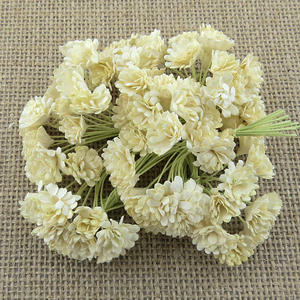 100 Mulberry Pappers Gypsophila IVory